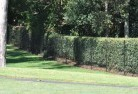 South Johnstone Wire fencing 15
